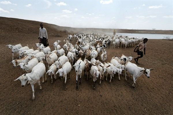 How Drought And Politics Are Exacerbating Pastoralist Violence In Kenya