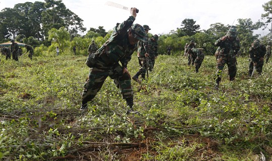 Soldiers destroy illegal fields of coca in Bolivia.