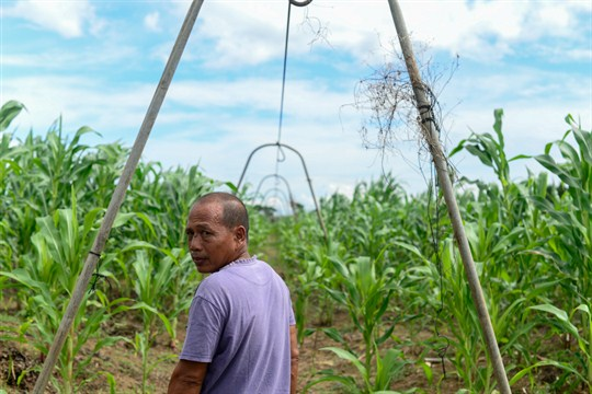 A Filipino farmer at his banana plantation on the island of Mindanao in the southern Philippines.