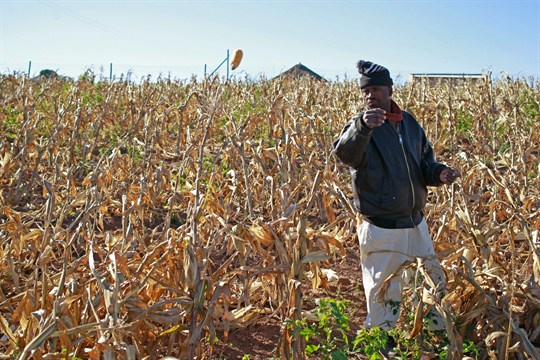 A farmer picks his maize, in Qunu, South Africa, June 12, 2013.