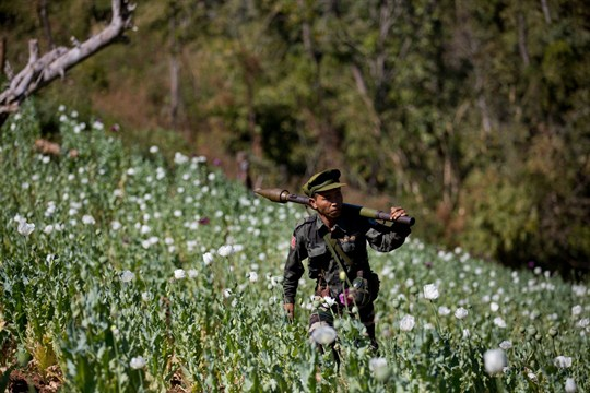A Taang National Liberation army officer walking through a poppy field in Myanmar's northern Shan state.