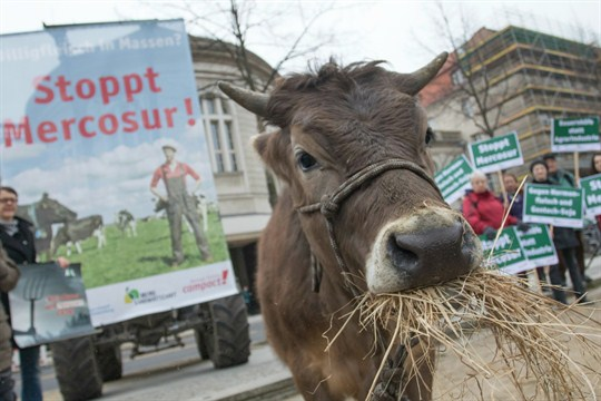 Activists protest with a cow against the EU-Mercosur trade deal, in Berlin.