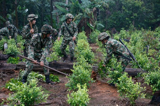 Soldiers uproot coca shrubs as part of a manual eradication operation in San Jose del Guaviare.