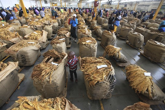 In Zimbabwe, where modernizing agriculture will drive economic development, a child sits in a tobacco market.