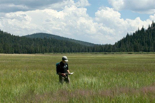 A Nature Conservancy staff member walks through land purchased by conservation groups near Truckee, Calif.