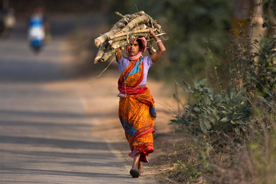 A woman carries firewood on the outskirts of Gauhati, India