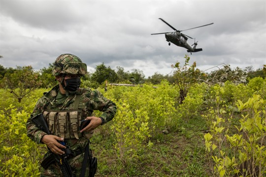 A soldier stands on a coca field during a manual eradication operation in Tumaco, Colombia