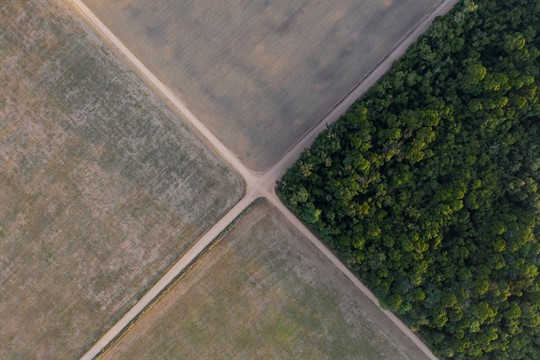A section of the Amazon rainforest stands next to soy fields in Belterra, Para state, Brazil