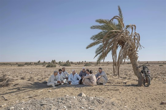 Egyptian farmers sit under the shade of a dried-up palm tree in Egypt.